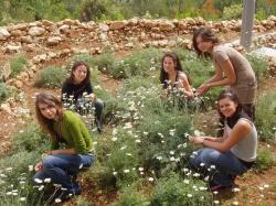 Učenice OŠ Valentina Klarin Preko u svom vrtu
