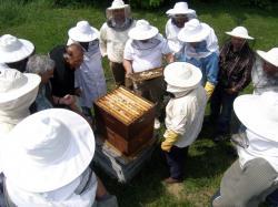 Hrvatski pčelari i med napokon ravnopravni na tržištu