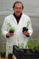 Voditelj projekta uzgoja stevije u Hrvatskoj – Doc. dr. sc. Bruno Novak