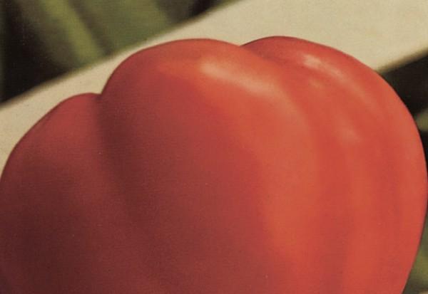 Volovsko srce jedna je od najomiljenijih starih sorta rajčice (Dokumentacija Mićo Brkanović)