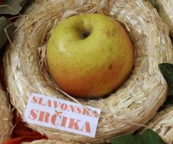 S izložbe starih sorata jabuka: slavonska srčika (Snimio Dražen Kopač / Acumen)