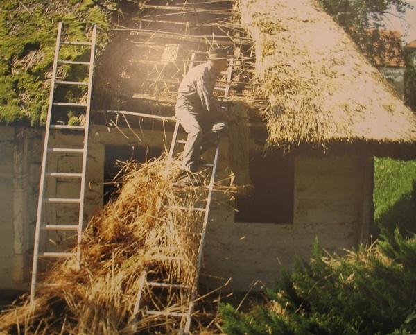 Zamjena 15 cm debela krova obrasla mahovinom novom raženom slamom debelom25-30 cm (Snimila Spomenka Vlahović)