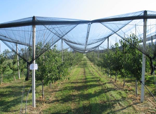 Hoće li se i za plodove ovoga modernog voćnjaka naći IPARD-ova novca? (Snimila Božica Brkan / Acumen)