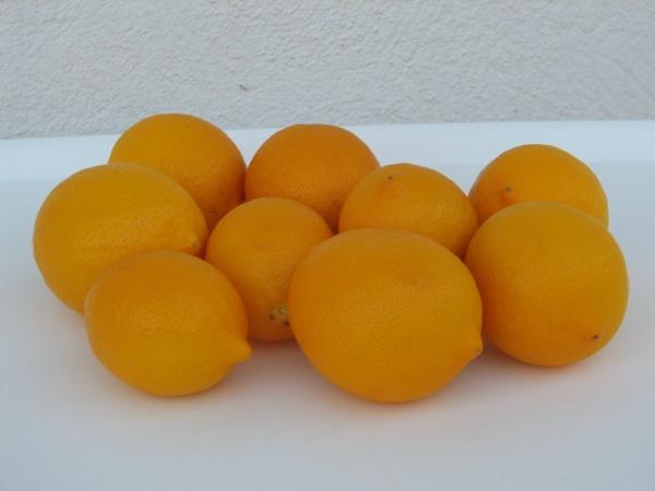 Narančasto žuti limun  sorte Meyer (Snimio Stanislav Štambuk)