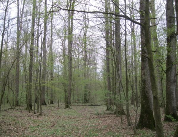 Kozarčeva i Vidmarovićeva šuma Carevina uoči Đurina 65. rođendana (Snimio Miljenko Brezak / Acumen)