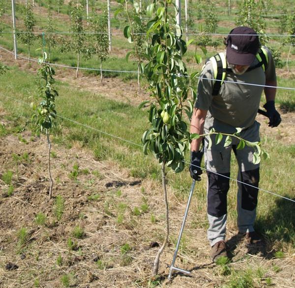 Mikorizacija voćnjaka u Novskoj (Fotografija Bio-Budućnost)