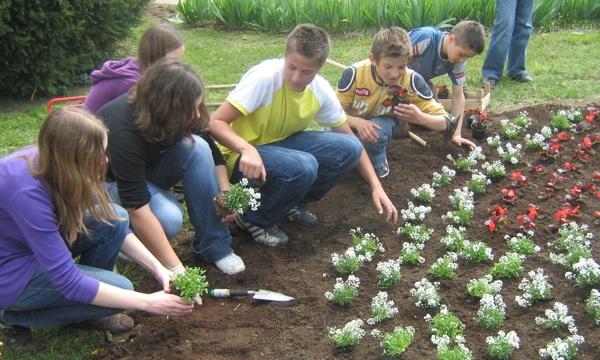 Osnovci OŠ Alojzije Stepinac iz Krašića srodili su se sa svojim biljkama (Fotografija HRT)